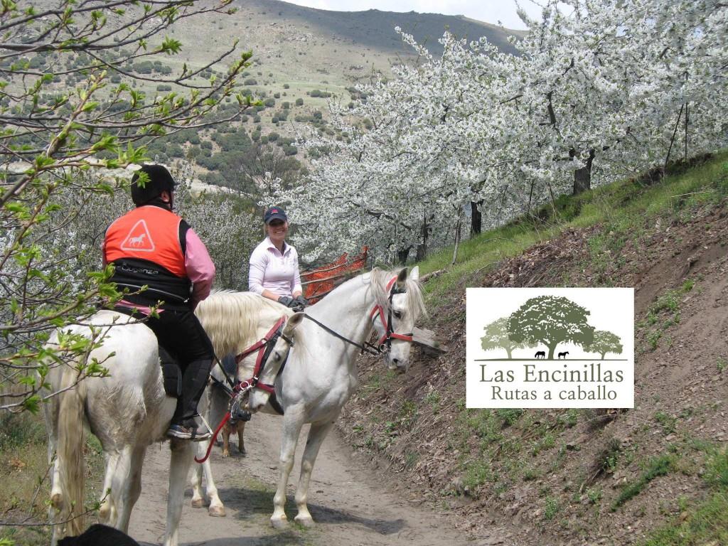 Sierra Nevada. Horse Riding.