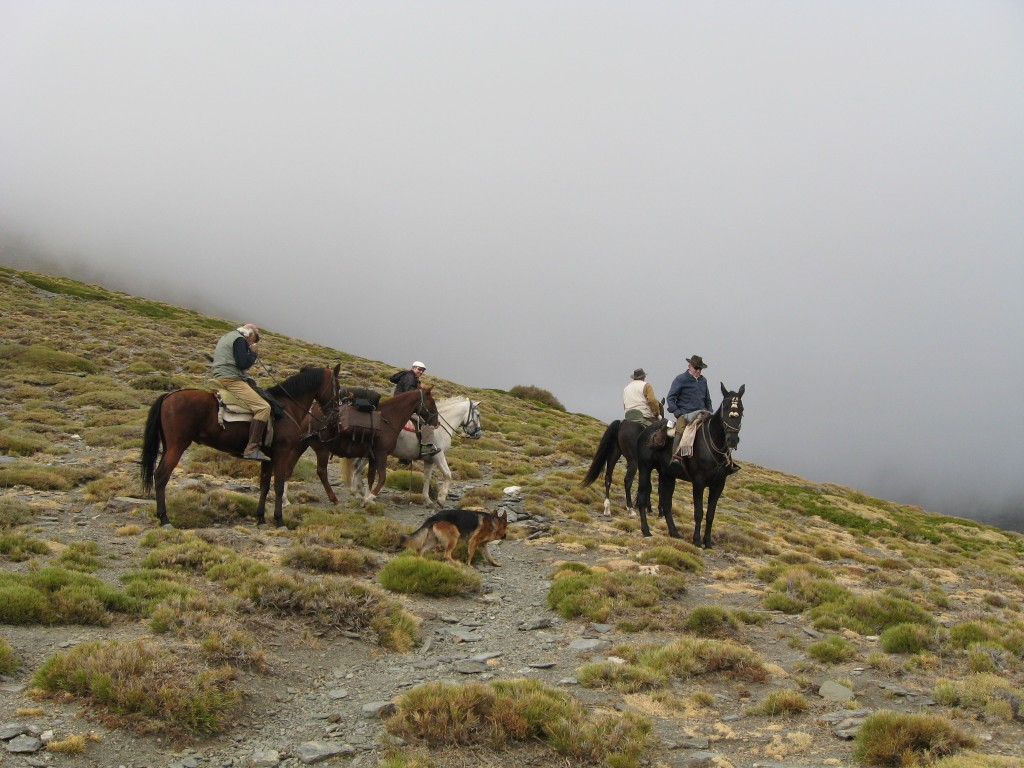 caballo guejar sierra sierra nevada