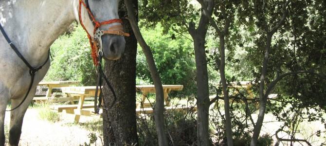 Guejar Sierra: Paseo de los Romanticos a caballo. Sierra Nevada.