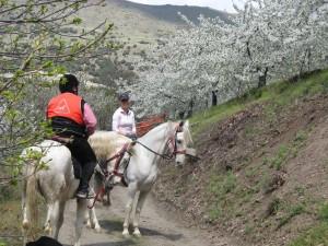 granada paseo a caballo