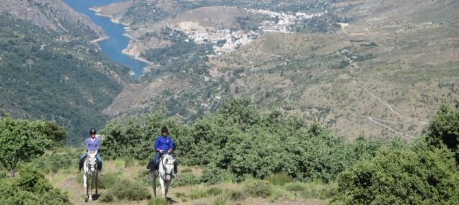 Caballos en Sierra Nevada