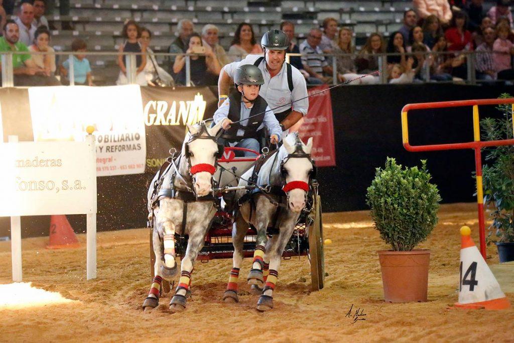 pony competicion